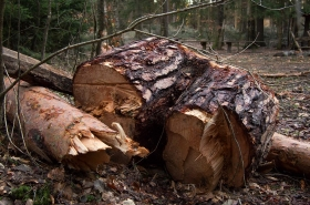 Pozůstatek stromů, kde jsem se kdysi zaklínil